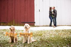 Save the Date with dogs.  Photo by Lisa Rhinehart of Rhinehart Photography, http://blog.rhinehartphotography.com/   Goldendoodle bred by Kimberly Jackson of Puppies of Alfarata Acres, http://puppiesofalfarataacres.com/