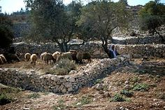 "BETHLEHEM, ISRAEL: Rural areas to the east of the city are traditionally believed to be the area of the fields of the shepherds ""keeping watch o'er their flocks by night.""  Even today local shepherds can be seen tending their flocks in this same area. I want to visit Bethlehem before I die. ♥"