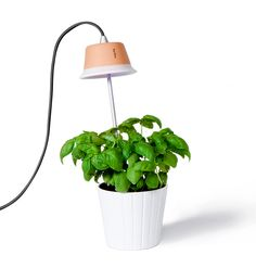 Love this design-centric indoor plant #lighting for container #gardens--blends style with functionality. #containergardening #interiordesign