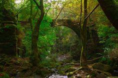 El parque de Fragas do Eume, en Galicia. | 23 lugares de España que tienes que conocer tarde o temprano