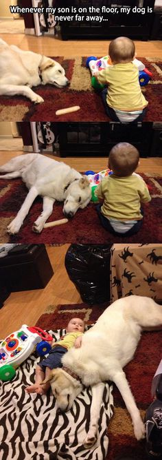 A toddler's best friend…   A bit younge to be a toddler but still....