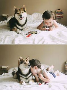 柴犬 Shiba inu,,so cute <3 <3 <3