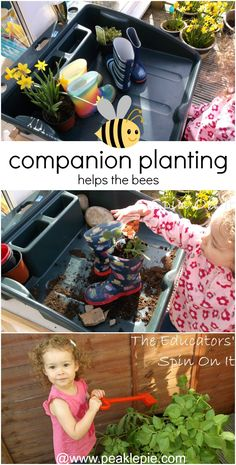 Garden Science: Learning about Bees in the Garden Raised Garden Beds, Raised Beds, Bee Safe, Thing 1, Bugs And Insects, Garden Care, Companion Planting, Healthy Kids, Fun Learning