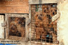 WT Council Prohibit Puppy Stores in Washington Township from selling dogs from Puppy Mills Pet Store Puppies, Puppy Store, Dogs And Puppies, Washington Township, Stop Animal Cruelty, Puppy Mills, What You Can Do, Mans Best Friend, Pet Care