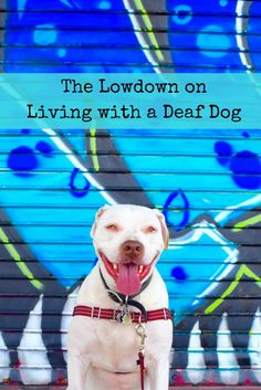 Here's the lowdown on what you need to know about living with a deaf dog!