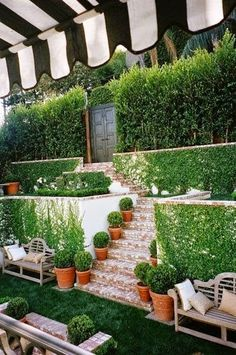 Boxwood garden with a striped awning