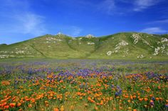 Wild flower landscape by Miguel Angel Perez
