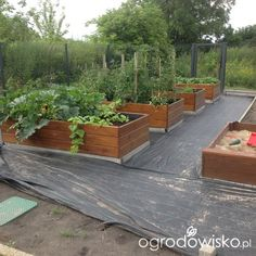 Vege Garden Design, Vege Garden Ideas, Vegetable Garden Planning, Veg Garden, Edible Garden, Outdoor Garden Bench, Diy Garden Bed, Raised Garden Beds, Outdoor Gardens