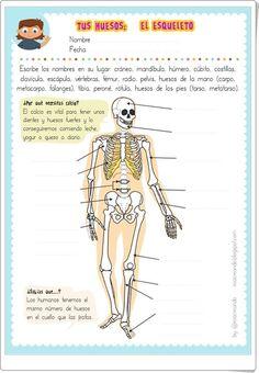 """Tus huesos: El esqueleto"" (Ficha de Ciencias Naturales de Primaria de Eva Barceló) Plant Science, School Hacks, Physical Education, Human Body, Activities For Kids, 1, Pop Up, Apps, Hercules"