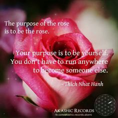 The purpose of the rose is to be the rose. Your purpose is to be yourself. Self Love Quotes, Words Quotes, Wise Words, Quotes To Live By, Me Quotes, Sayings, Change Quotes, Thich Nhat Hanh, Spiritual Words