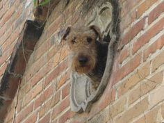 """""""Dog Looking at us from his house"""" By Phoenix American Cruiser   This photo was taken on December 20, 2009 using a Canon PowerShot SD780 IS."""