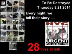 """**28 LIVES AT RISK in the NYC AC&C - """"To Be Destroyed August 21, 2014.""""  Please ADOPT!! FOSTER!! PLEDGE!!! Save a Life!!  They are ALL deserving of a Loving & FOREVER Home.  https://www.facebook.com/media/set/?set=a.847902988561023.1073742405.220724831278845&type=1"""