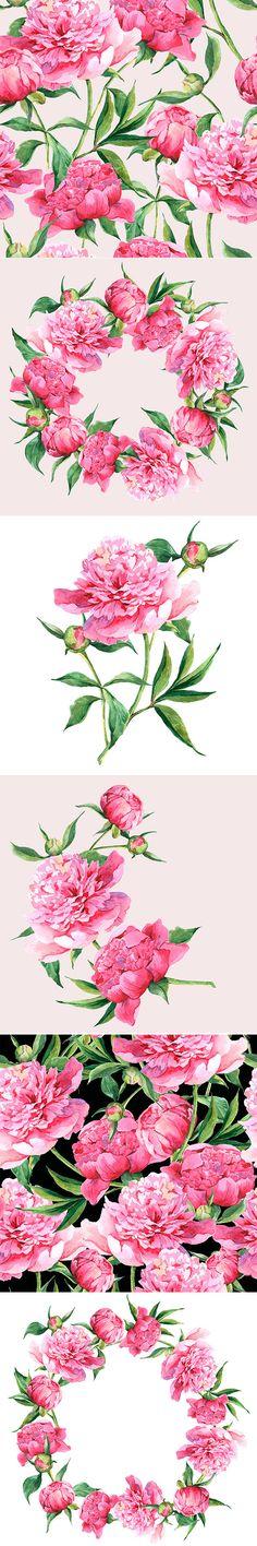 Beautiful bouquet of pink peonies. Botanical illustration