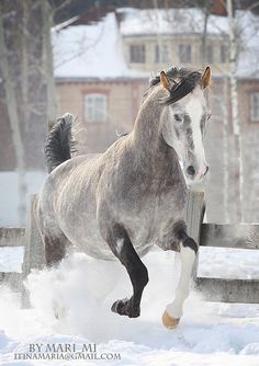 Grey Horse in snow by mari-mi on DeviantArt All The Pretty Horses, Beautiful Horses, Animals Beautiful, Cute Animals, Clydesdale, All About Horses, Majestic Horse, Horse Love, Gray Horse