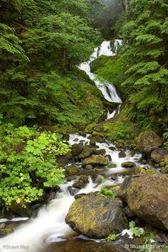 quinault rains-5 - ID: 7975679 © stuart  may