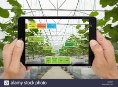Smart agriculture concept, Agronomist or farmer use Artificial intelligence and augmented reality in farm to help grow systems, saving water ,resource Stock Photo