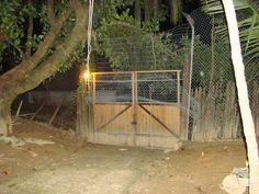 O portão hoje com as telas sendo colocadas. A cerca de bambu anterior ainda está atrás da tela nova.