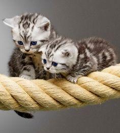 two sweet little kittens