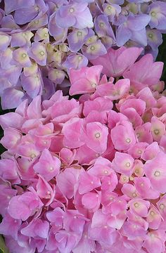 Hydrangea mix... I want to get some of these!!! So pretty