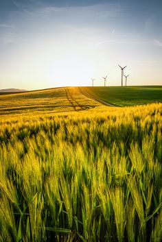 Wheat fields in front of a wind power plant in Lower Austria. Wind Power, Solar Power, Global Warming, Permaculture, Climate Change, Country Roads, Wheat Fields, World, Austria