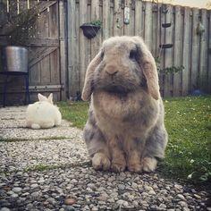 Even poseren... #bunny