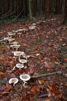 vjecnost:    Fairy circle by ZAKempson on Flickr.