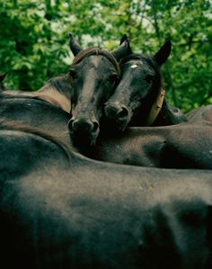 Frédéric Lagrange | 01 Magazine All The Pretty Horses, Beautiful Horses, Beautiful Images, Brown Horse, My Animal, Stables, Beautiful Creatures, Animals Planet, Baby Animals