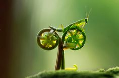 This is the incredible snapshot that appears to show an praying mantis riding off into the sunset on a bicycle