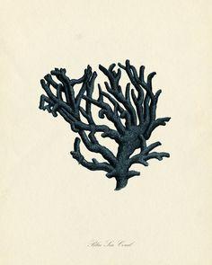 Art - Antique Italian Blue Sea Coral Plate - Natural History Print