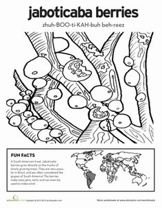 first grade nature geography worksheets jaboticaba berries coloring page