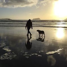 Bella walks MacKenzie Beach in Tofino with her mama Pacific Ocean, Walks, Pup, Silhouette, Adventure, Sunset, Photo And Video, Beach, Instagram Posts
