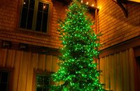 green lights on evergreen tree Christmas Tree Outside, Outdoor Christmas, Christmas Lights, Green Lights, Evergreen Trees, Tree Lighting, Decorating Your Home, Holidays, Holiday Decor