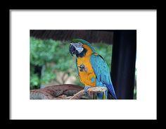 blue and gold, macaw, bird, nature, michiale, schneider, photography, interior design