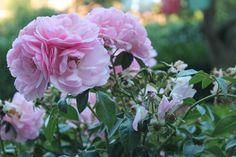 Kleine Engelse tuinmetamorfose   Eigen Huis & Tuin