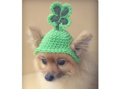 St Patrick's Day pet beanie!!!!