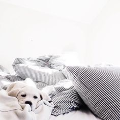 Sunday snuggles are