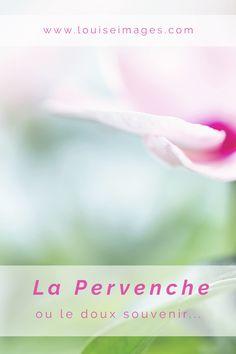 Louise images - Macrophotographie : La Pervenche Zinca.