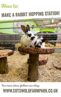 The happiest bunnies are those that are able to display natural behaviours like hopping, climbing, tunnelling and digging. We've been thinking of fun ways to give our rabbits the opportunity to do these things whilst living in the Touch Barn. Learn how to make your own rabbit enrichment toys on our blog.