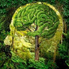 consciência verde