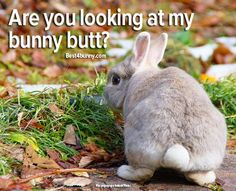 Bunny Butts are so cute! www.best4bunny.com