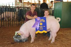 County Fair Winner.