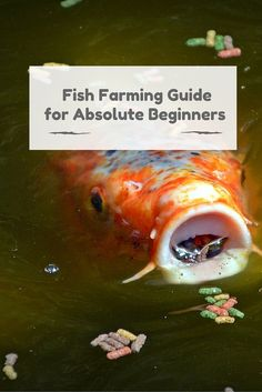 This is a guide for home based  #fish #farming. It doesn't matter where you live, start a fish farm at home