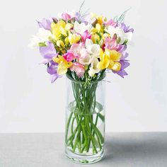 A beautiful freesia in a vase, check out more of stunning freesia flowers on our website #freesia #flowers #flower #flowerlover #fnpuae #gifts #flowergifts #dubaigifts #florist #florsitdubai #floristabudhabi #onlineshop #flowerpictures #flowerphotos Flower Bouquet Delivery, Best Flower Delivery, Online Flower Delivery, Flower Delivery Service, Flowers By Post, All Flowers, Amazing Flowers, Flowers Garden, Online Flower Shop