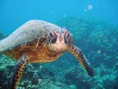 Cinque Island Wildlife Sanctuary in Andaman and Nicobar, India