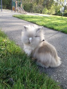 oh my god, where did your face go little bunny? Cut Animals, Cute Baby Animals, Animals And Pets, Funny Animals, Funny Bunnies, Baby Bunnies, Cute Bunny, Bunny Rabbits, Lionhead Rabbit