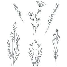 Zen Doodle, Doodle Art, Meadow Flowers, Hand Embroidery Patterns, See On Tv, Grasses, Botanical Art, Clear Stamps, Art Reference
