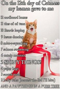 cute kittens with funny quotes cute cats and pets Cute Funny Animals, Funny Animal Pictures, Funny Cute, Cute Cats, Top Funny, Cat Fun, Funniest Animals, Stupid Funny, Hilarious