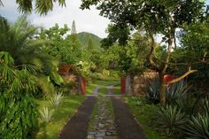 The gardens at the Golden Rock Inn | Nevis, Caribbean island | designed by Raymond Jungles | source: Gardenista