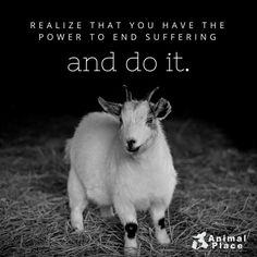 Realize you have the power to end suffering. To change the world. To sow seeds. And do it.