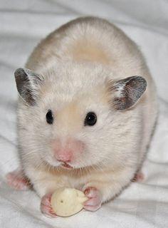 Timeline Photos - Hamster Mischief